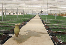 Adirom -  climate systems for greenhouses